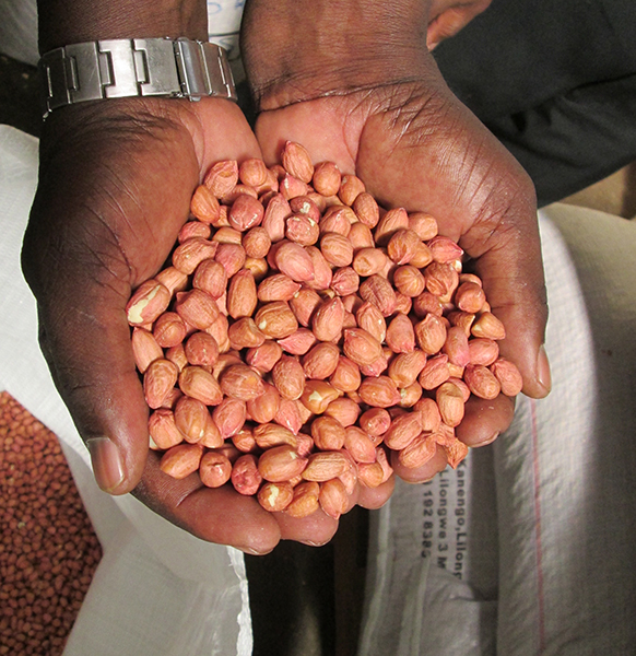 Small Holder Farmers and the ground nut market: